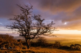Hawthorn tree at sunset. Peak District landscape photography © Chris James